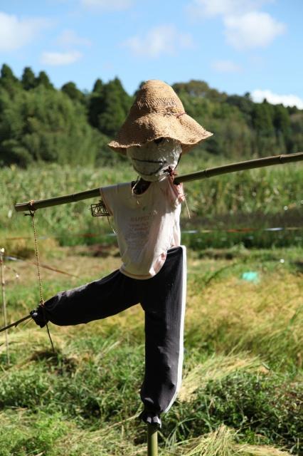 稲刈り015.JPG