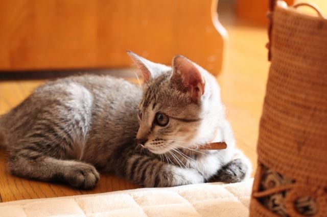 子猫.jpg