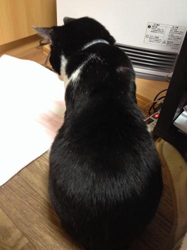 白黒猫 チイ