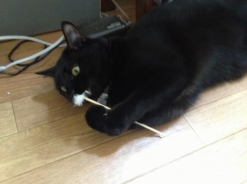 耳かきをしゃぶる黒猫