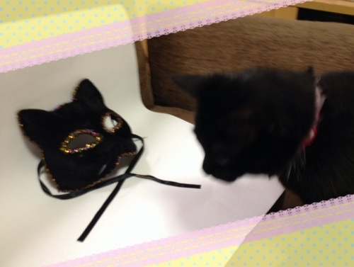 黒猫仮面と黒猫