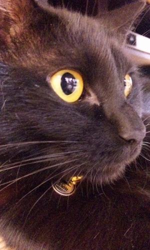 りりしい黒猫
