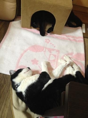 眠る牛猫と黒猫