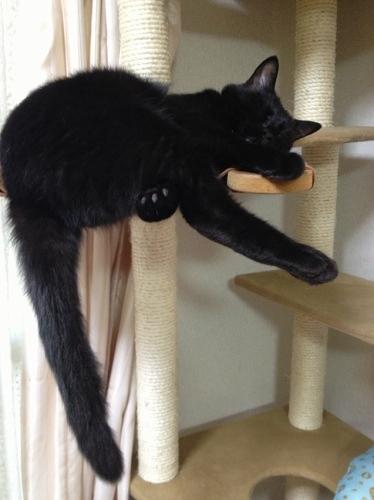 キャットタワーで眠る黒猫
