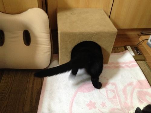 黒猫のお尻