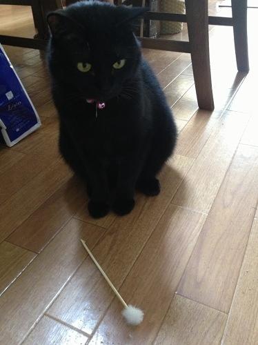耳かきと黒猫