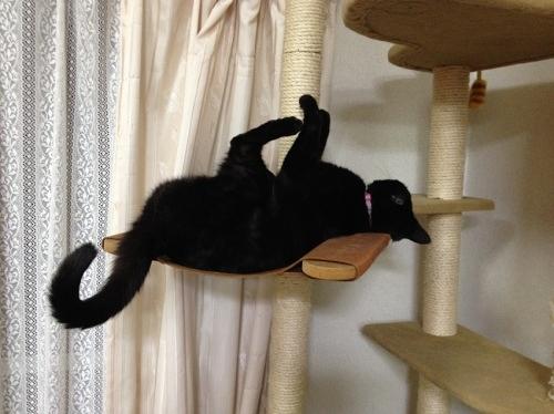 キャットタワーの黒猫