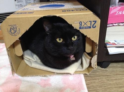ダンボールと黒猫