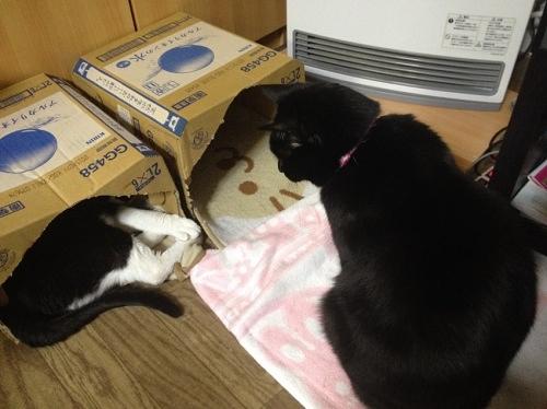 牛猫と黒猫/