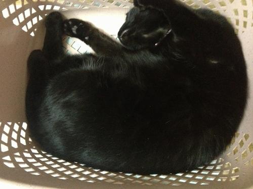 洗濯かごの中の黒猫