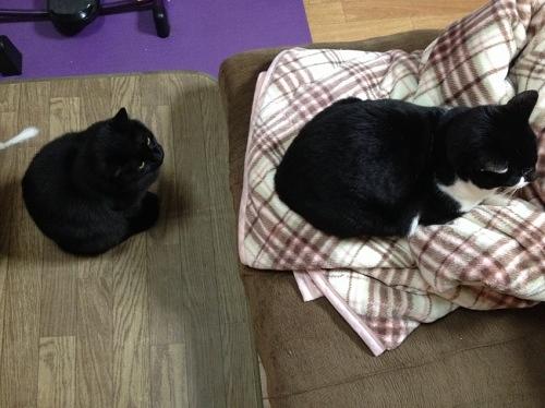 牛猫と黒猫