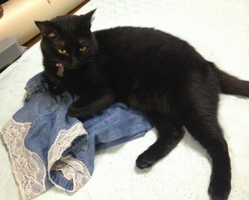 脱いだ服の上の黒猫