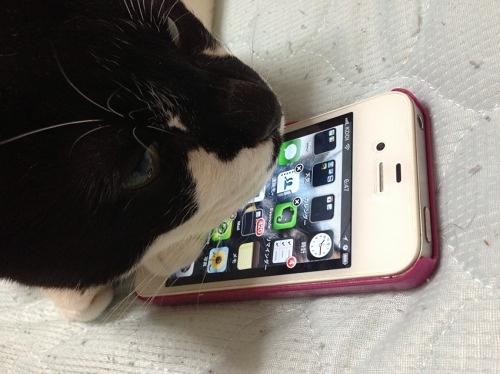 iPhoneとデジねこ