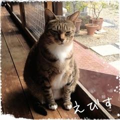 猫 えびす