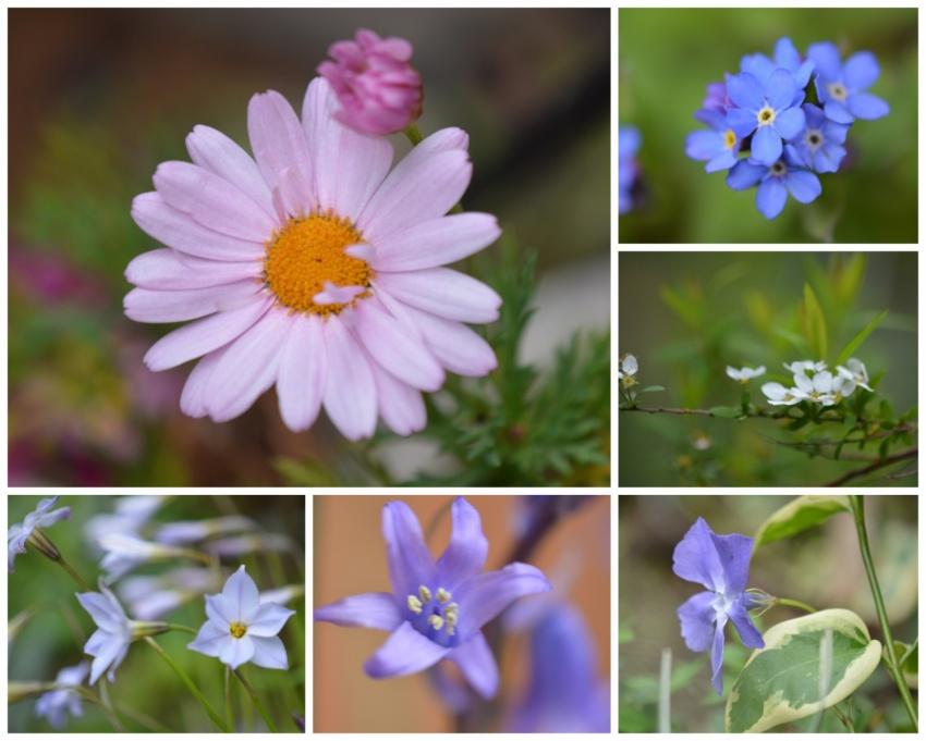 4月の花たち