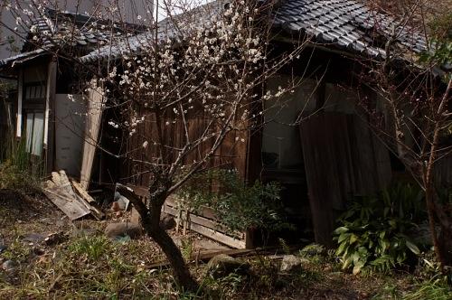 人去りき盛りは梅の花ばかり