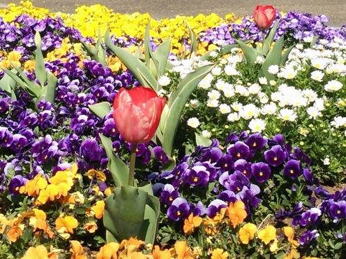 春の花いっぱい