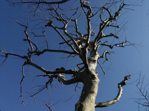冬空と枯木