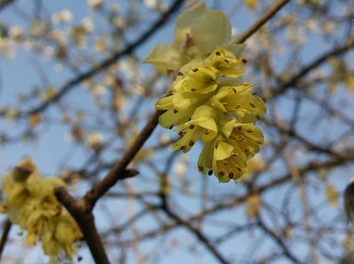 春の公園で見つけた花