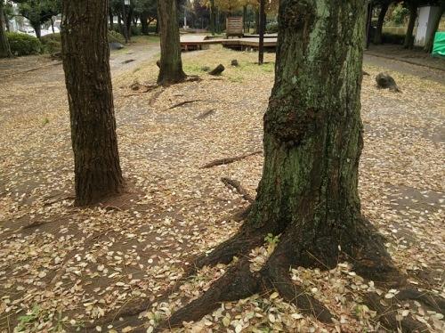 木は語らず