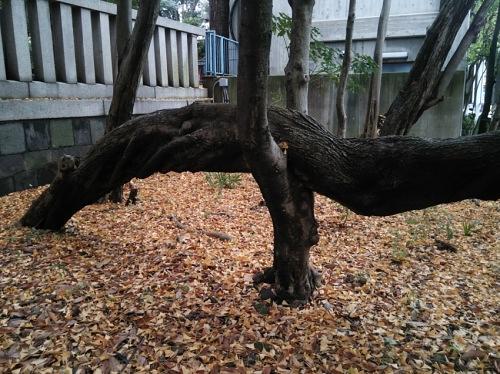木を支える木