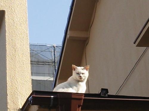 屋根上の猫