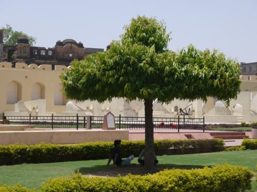 かわいい形の木