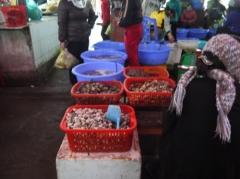 魚屋さんの貝