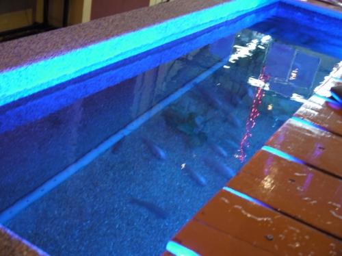 大きいお魚の水槽