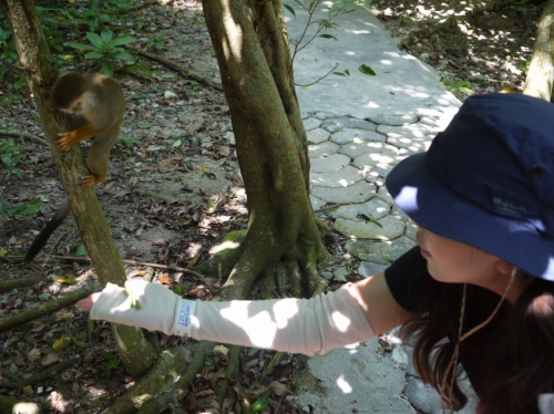 お猿さんに餌をあげよう!