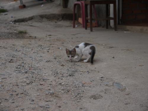ノラネコ。子猫だ!